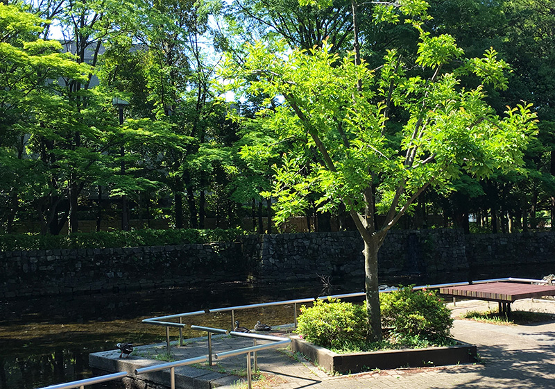 府中の森公園 石垣壁泉